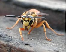 Yellow Jackets Pest Control Richmond VA