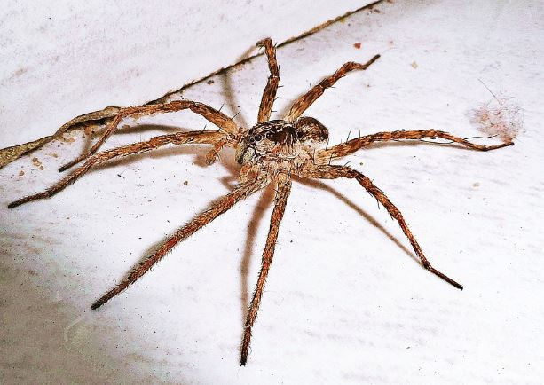 House Spider Pest Control Richmond VA